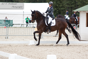 Dressage Cup_1 by CalyHoney