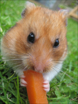 Mmm.. Carrot... by Frances23
