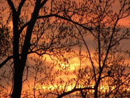 Fiery Sunsets/Sunrises silhouette two- Leaves by ruuk-ve