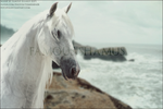 FS-Andalusian-01 by FamousShamus109