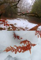 Colours of Winter by gianf