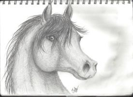 Traditional Horse head by cayfie