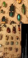 Assorted Insects Stock 2 by Melyssah6-Stock