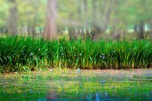 Marsh Grass by pubculture