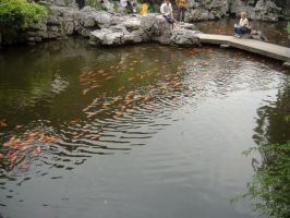 Migration of the Goldfish by lifedrawnpoorly