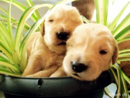 Puppies in a Basket by BHopeS