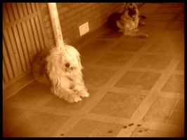 My dogs by MagiaBlanca