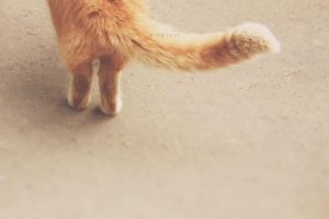 paws by odpium