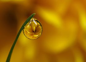 Dew Drop by Alliec