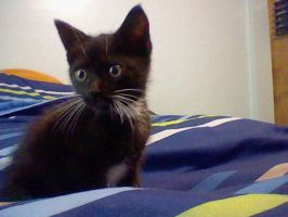 this is mah new kitten :3 by ToaTenitrus