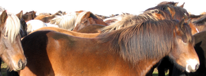 Lots of Horses Stock 1 by thevirtualgaucho