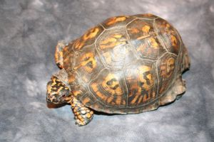 Turtle Has A Tortoise by thisfleshavenged