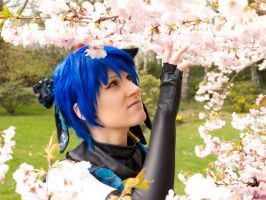 Vocaloid: Kaito Cerry Blossom by Jen-kun