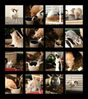 I very love my rats by GodSpeed-Photography