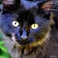 Le Chat Bleu I by hyneige