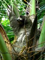 Sloth in Manzanillo by Whyamithewerewolf