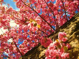 blossom out. by mihi2008