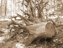 Uprooted by morgie39