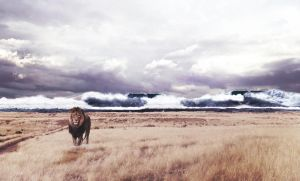 Lion Storm by Tommy92c