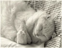 Ziggy Asleep by substar