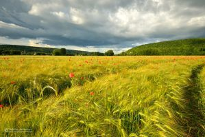 Spring field by matthieu-parmentier