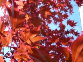 red leaves by wispered