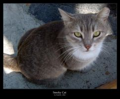 Smoky Cat by cat-lovers