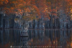 Cypress Autumn by ChadRouthier