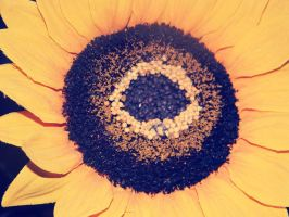 Sunflower by MalMalaise