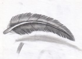 Feather 1 by crazy1993