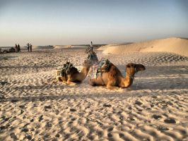 camels by TcOriginal