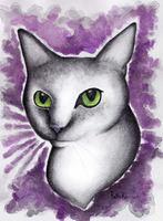 White Cat by CaptainBeth