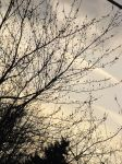 Branches against the cloudy sky by thehootfrommrowliy