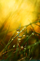 Waterdrops by Tiina23