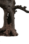 hollow tree trunk png by camelfobia