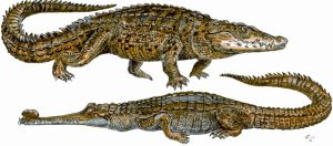 Crocodile and Gharial by batworker