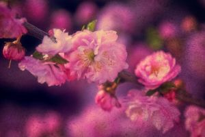 Dreaming of Spring by benvance
