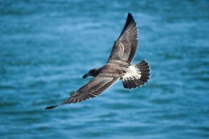 Flying Sea Bird 2 Stock by CNStock