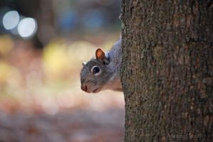 Cautious Grey Squirrel by Pagan-Inspiration