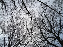 Branch Covered Sky by jay070490