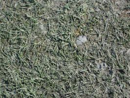 Trampled Grass by racehorse87-stock