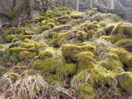 Mossy Forest Ground Stock 1 by Meta-Stock