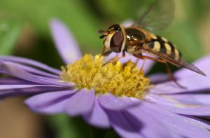 Hover Fly 2 by spitfire900
