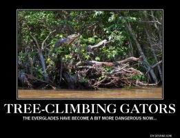 American Alligator Demotivational by PCAwesomeness