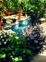 Botanical Gardens by Jazzs-girl-4ever