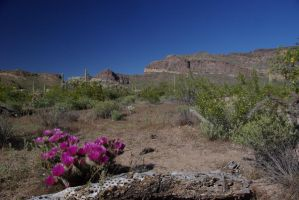 Ajo Mountains with Hedgehog by PatGoltz
