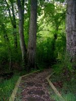 Enchanted Forest Stock 25 by FairieGoodMother