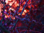 Sunset Flowers -6- by IoannisCleary