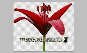 Masked Crimson Lily Stock PSD by Solace-Grace