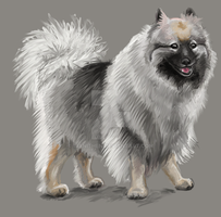 Keeshond by Tianithen